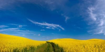 Wymiana handlowa miedzy Polską a Ukrainą | transport i spedycja ICT