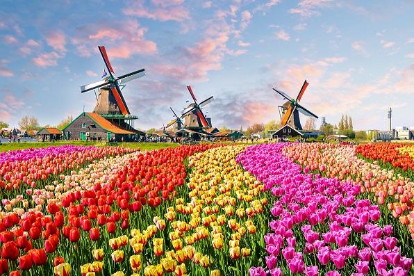 Transport Holandia